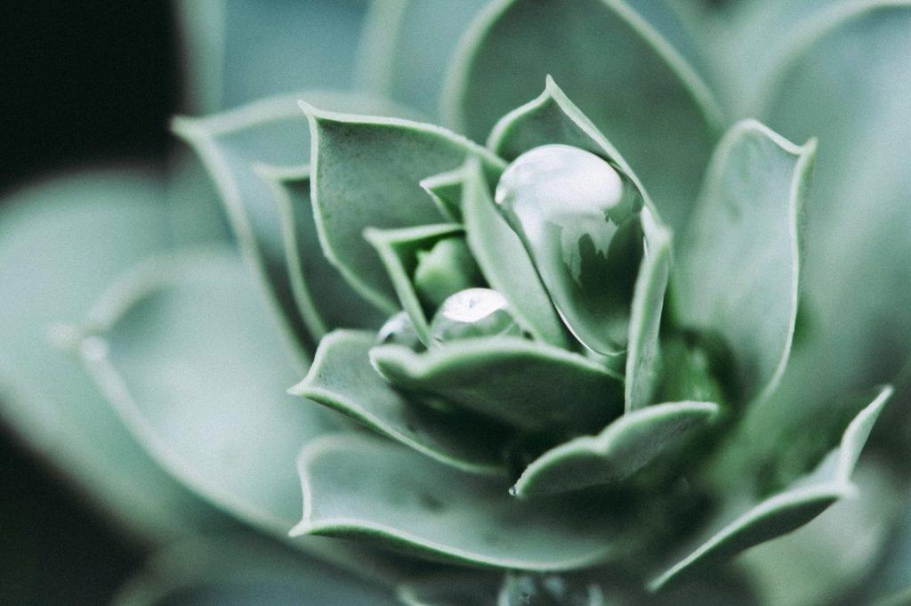 Facial Benefits of Aloe Vera